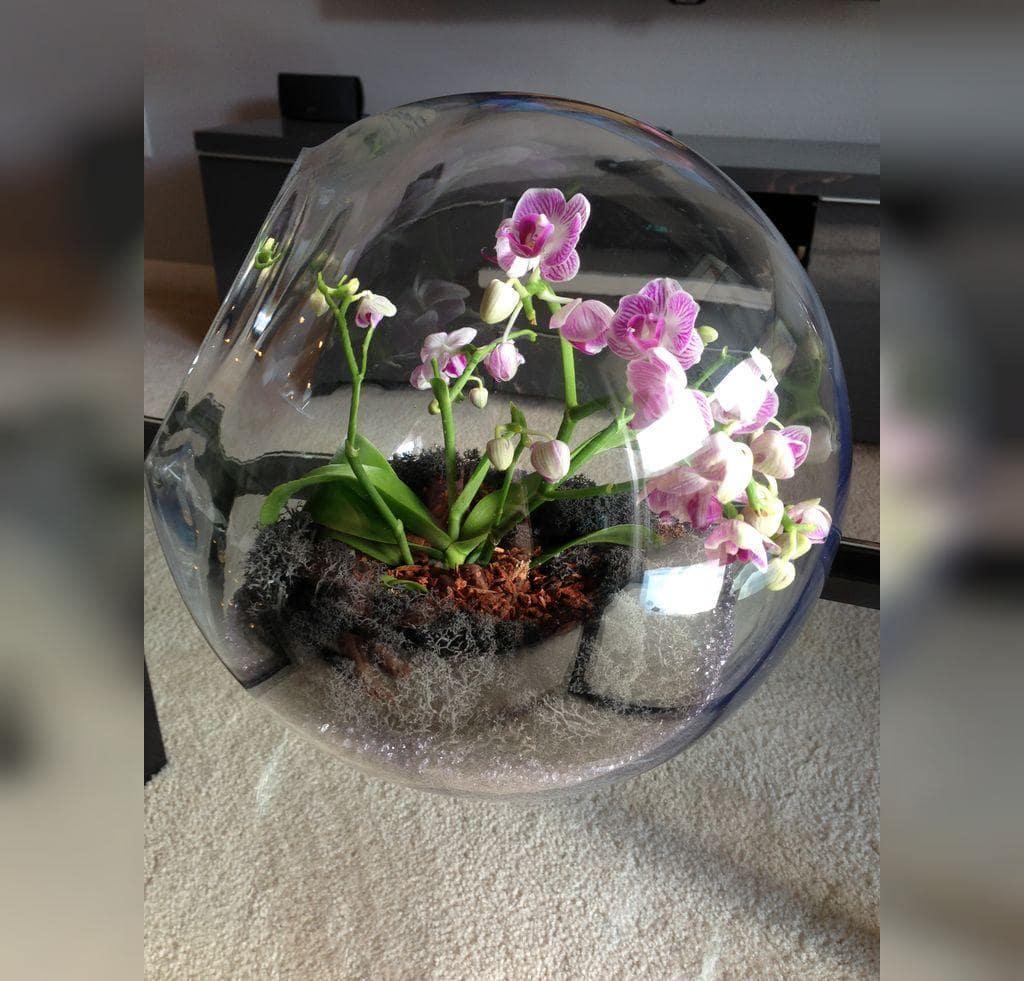 گیاهان مناسب برای تراریوم ،ظروف تراریوم، گلدان شیشه ای، تراریوم، باغ شیشه ای ، فروشگاه اینترنتی کمند