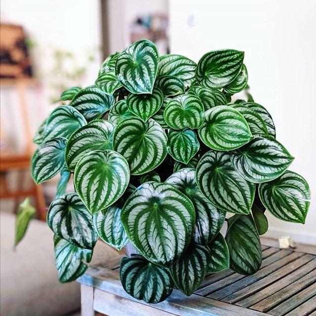 گیاهان مناسب برای تراریوم ،ظروف تراریوم، گلدان شیشه ای، تراریوم، باغ شیشه ای ، فروشگاه اینترنتی ، کمند