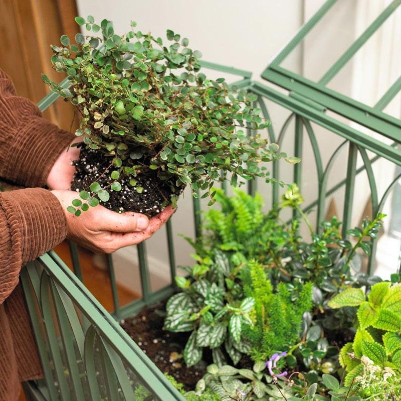 گیاهان مناسب برای تراریوم ،ظروف تراریوم، گلدان شیشه ای، تراریوم، باغ شیشه ای ، فروشگاه اینترنتی کمند، نگهداری از تراریوم